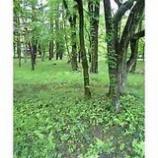 『森林浴』の画像