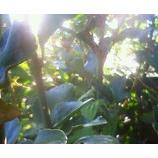 『木漏れ日の中で』の画像