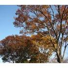 『樹に眠る』の画像