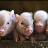 『火事から救出された子豚たち』の画像