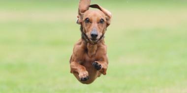 【画像】飛んでる犬かわいすぎわろたwwwww