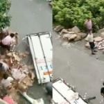 【動画】中国、「豚肉が天から降ってキター!」 付近住民が集まり恒例の略奪開始