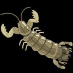 甲殻類のシャコ、Wi-Fi通信してたことが判明www