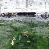 『冬の「モネの池」(岐阜県関市)へマイカーで行く人は必見!これは都会では味わえないですね。』の画像