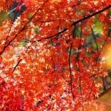 『滋賀竜王の紅葉(雪野山あたり)』の画像