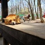 『コペン下道の旅~蔵王キツネ村で世話焼きキツネの仙狐さんに会ってきた話』の画像