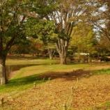 『10月末の国営昭和記念公園Ⅲ;立川市』の画像