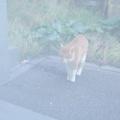 野良猫を威嚇する飼い主と野良猫の声をにゃんトークで翻訳した結果(子猫その113)(猫1545)