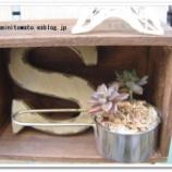 『オシャレ!キッチン用品・食器で植える多肉植物』の画像