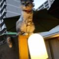 逢魔が時の猫ちゃん