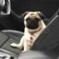 イヌが車から降りてこない。どうしたの? さぁこっちに来なさい! → 犬とのたたかいが始まった…