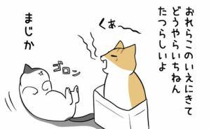 ネコたちの