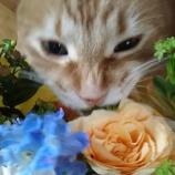『花束の行方』の画像