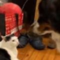 ネコが床でくつろいでいた。ねぇねぇ一緒に踊りませんか♪ → 誘う犬はこうなります…