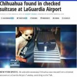 『空港のスーツケースからチワワ』の画像