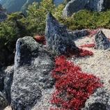 『草紅葉』の画像