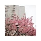 『春はもうそこまで…』の画像