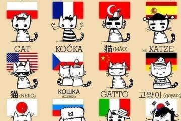 【かわいい】世界各国の猫の呼び名を表したイラストが海外で話題に