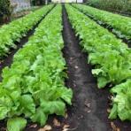 東京  町田  井上農園のブログ