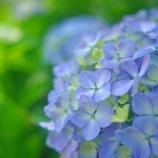 『【写真】 a7R  地元の梅雨、梅雨の花。1』の画像
