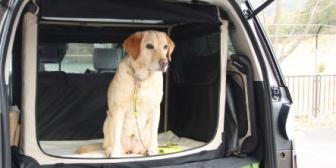うちの車内で義兄嫁が「狭いから犬の横に一人座ろう」と言って犬のケージがあるのにシートを無理やりこじ開けようとし、爪折れたと大騒ぎ。こんな人乗せるんじゃなかった