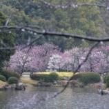 『早朝の栗林公園「雨の風情」』の画像