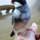 『小鳥の餌』の画像