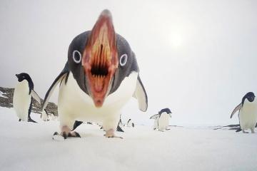 【アデリーペンギンからジャイアントペンギンまで】 ペンギンの生態語ろうぜ!