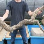 爬虫類倶楽部ファームブログ