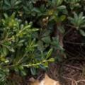 【ネコ】 公園の隅にモフモフなモノがあった。今日は寒い → それは仲良しな2匹の野良猫でした…