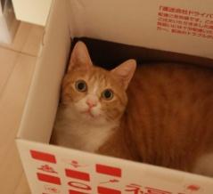 ひっそり消えた箱。