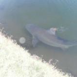 『人喰いサメが出現する恐怖すぎるゴルフ場』の画像