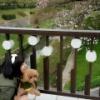 須田亜香里、向田茉夏の流出画像に写っていた花見スポットに行く