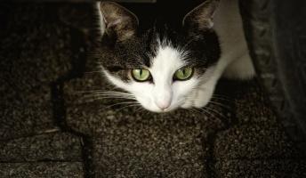 猫に関する不思議な話『猫の出産祝い』『恩返し』『猫又になる日も近い』他