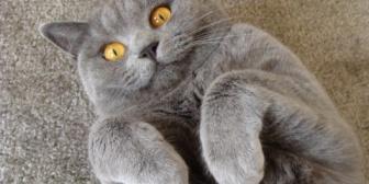 衝撃!人間を襲う猫の真相、衝撃!人間を襲う猫の真相、衝撃!人間を襲う猫の真相