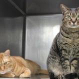 『猫の新しい慢性腎不全の薬』の画像