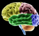 薔薇の香りが脳内の能力を30%アップさせると発表される