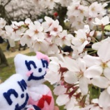 『ニッタちゃんダイアリー ~桜満開♪お花見♪~』の画像