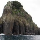 『孤島のコウモリ』の画像
