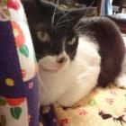 『老猫ソラ(11歳)の風邪は温度調節で治す』の画像