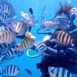 『ダイビング始めました~オープンウォーター海洋講習1日目~』の画像