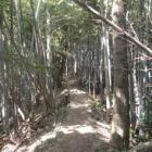 『今日のハイキングはタケノコとり・・・・!!』の画像