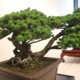 『本日から「盆栽・フラワーアレンジメント」展示会が戸田市文化会館2階で始まりました!』の画像