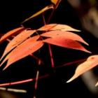 『里山の秋』の画像