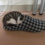 『スリッパ猫』の画像