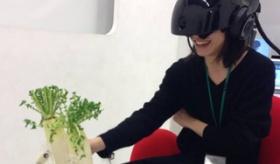 【テクノロジー】   日本が また頭のおかしい装置を 作ったぞ・・・。  大根にセクハラして 女性に触る事ができる ヴァーチャル・リアリティ装置。  海外の反応