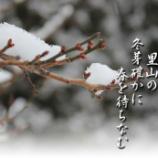 『冬芽確かに』の画像