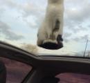 【画像】空中浮揚をする猫ちゃん、発見される
