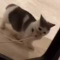 子ネコが「ねこじゃらし」を引きずっていた → 猫好きは断れません…