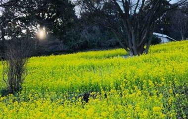 『【おでかけ】花のかおりで春を満喫!(金沢自然公園)』の画像